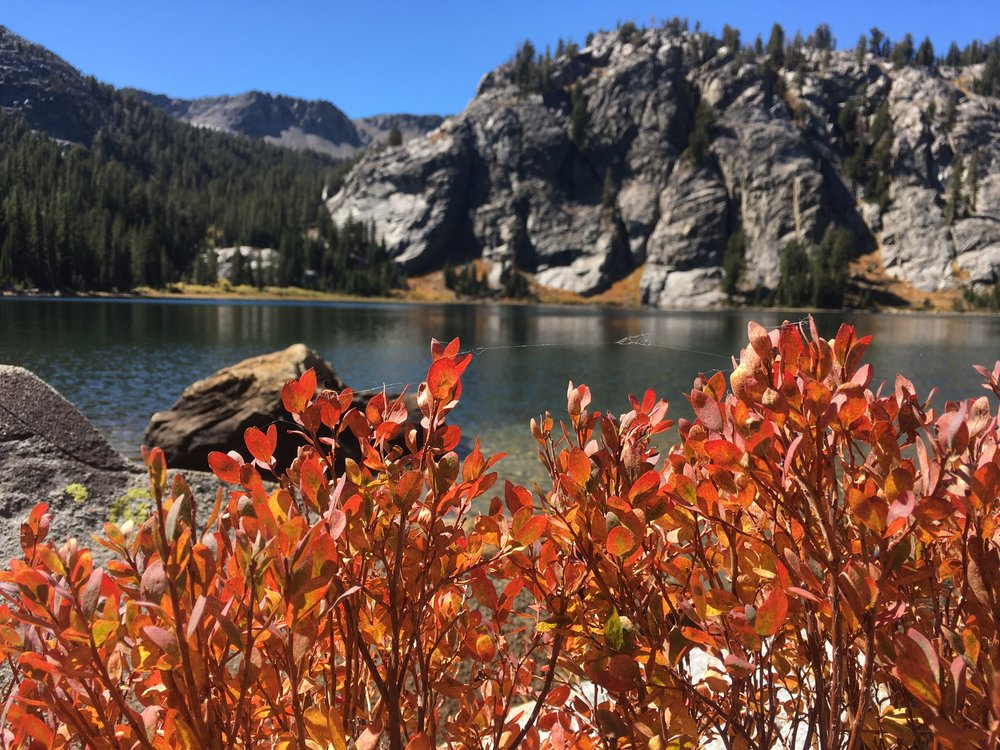 Rosalie Lake with a huckleberry bush showing its fall foliage.