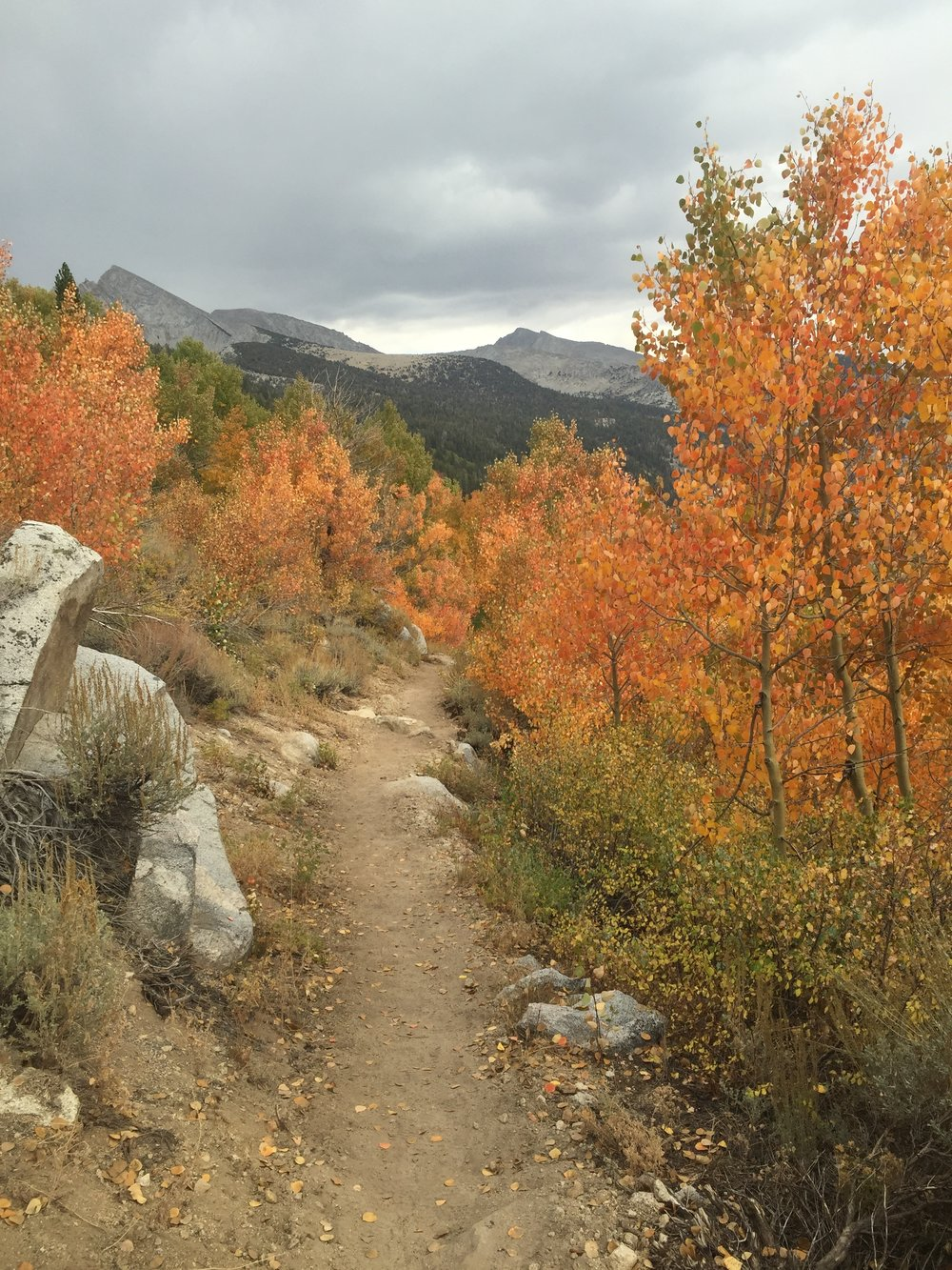 As we descend through glorious fall colors to the North Fork of Mono Creek, the sky has turned positively ominous