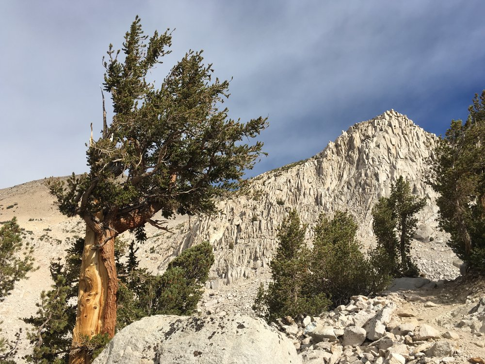 Lodgepole pines and some classic Sierra granite.