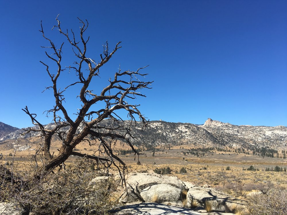 The new normal, burned trees and sagebrush.