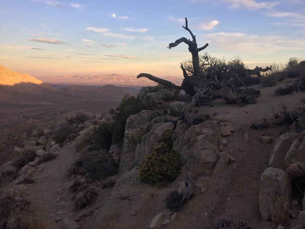 Desert evening light south of Bird Spring Canyon