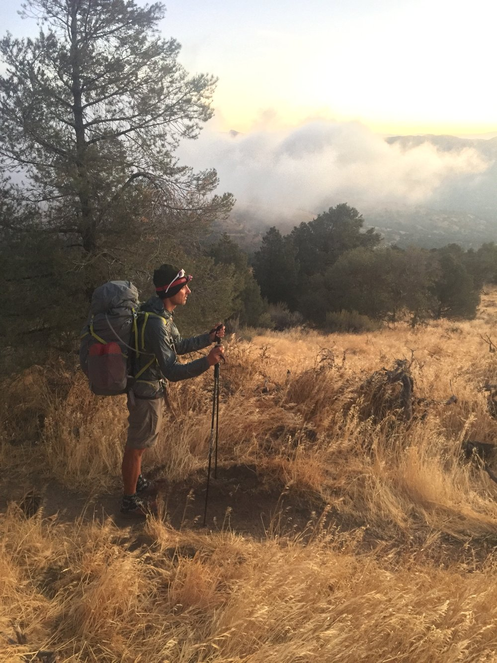Macro on a foggy morning north of Tehachapi