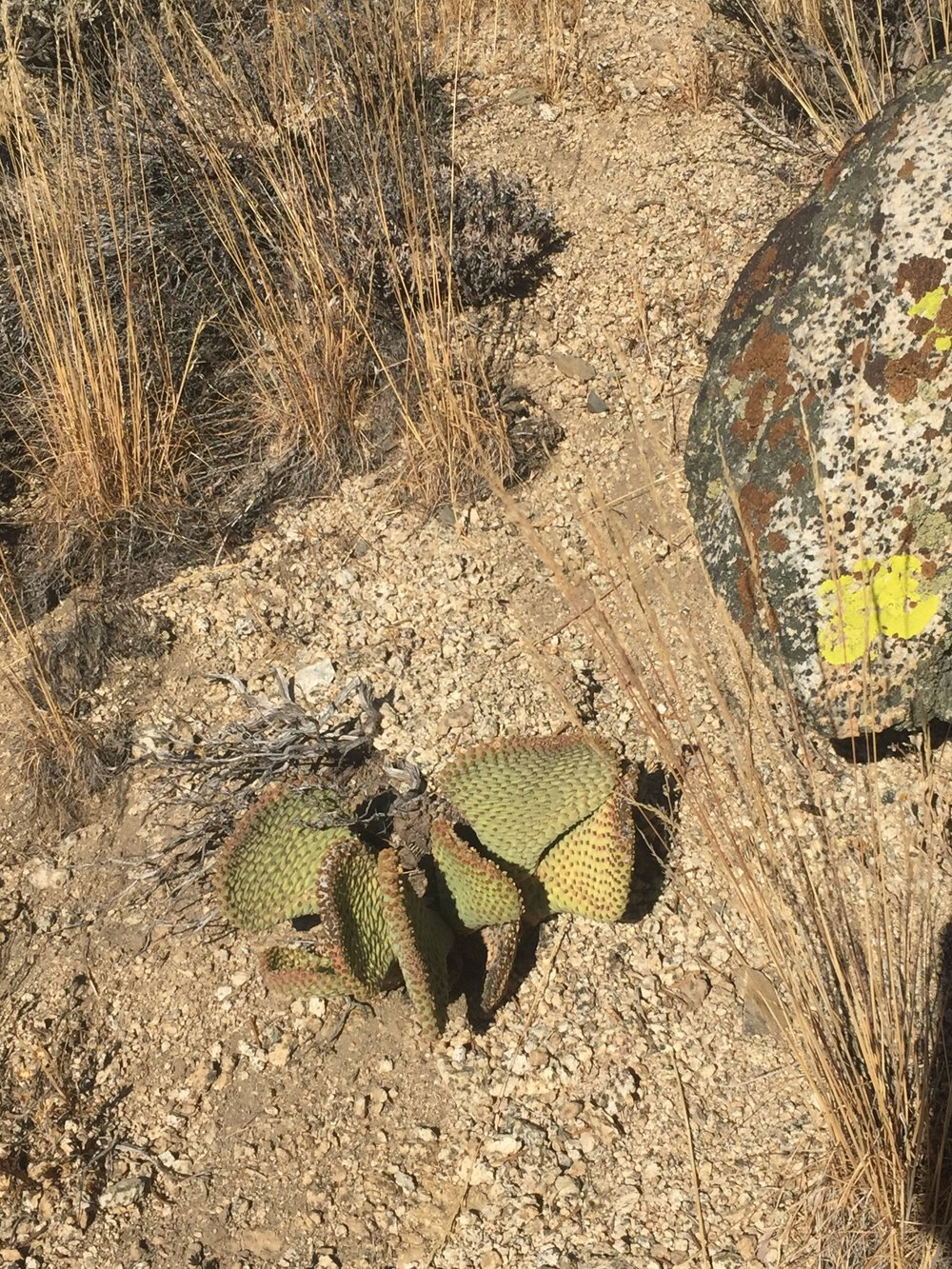 It's dry in the desert