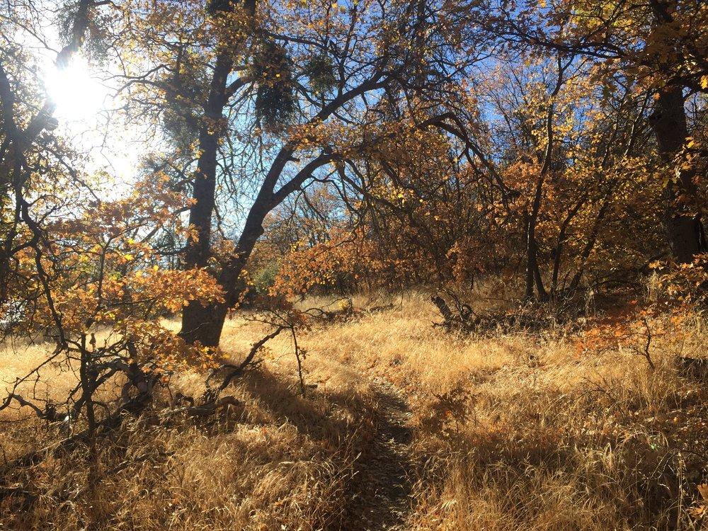 Golden light on the oaks of Liebre Mountain