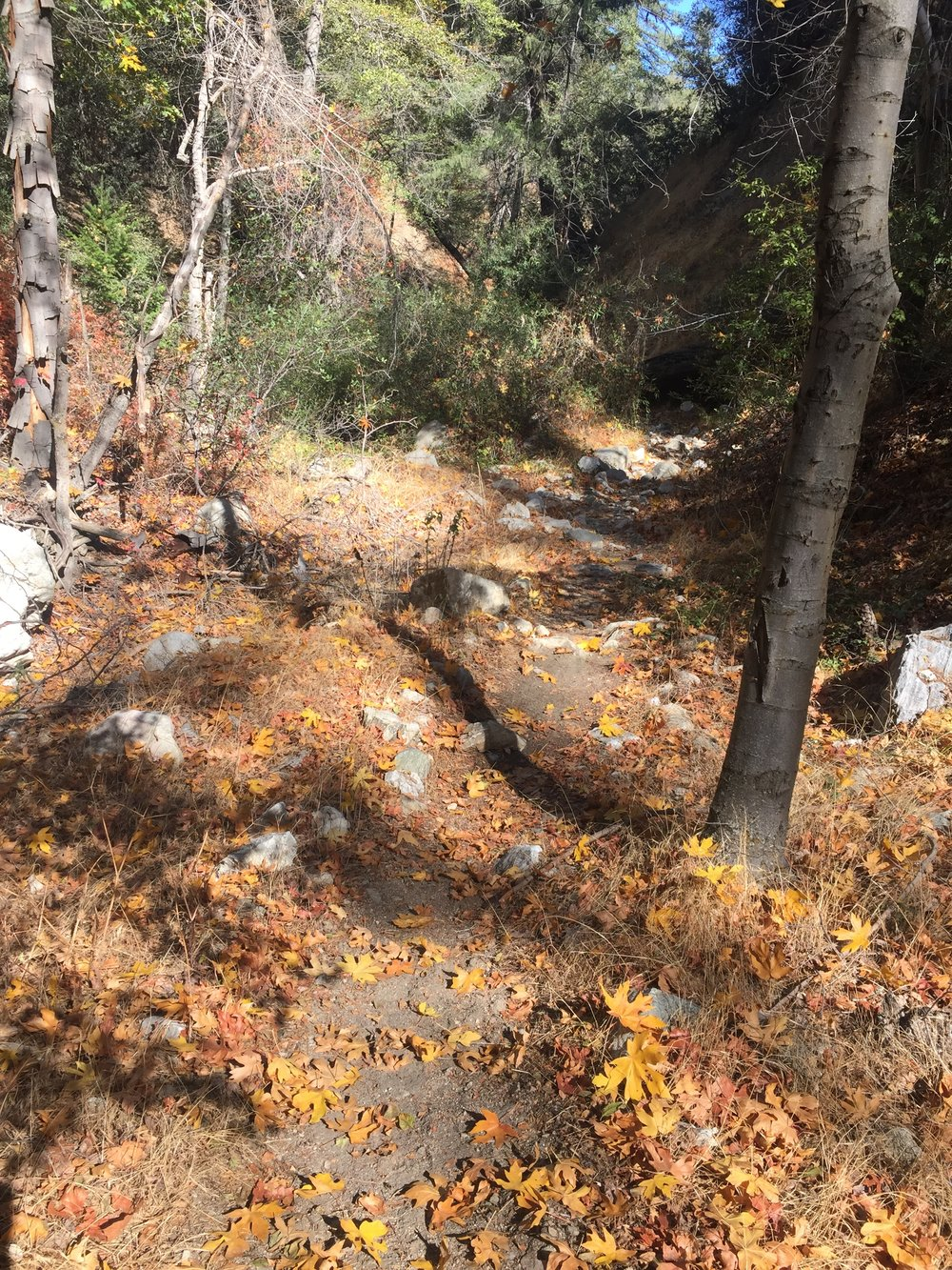 It's definitely fall in Shake Canyon