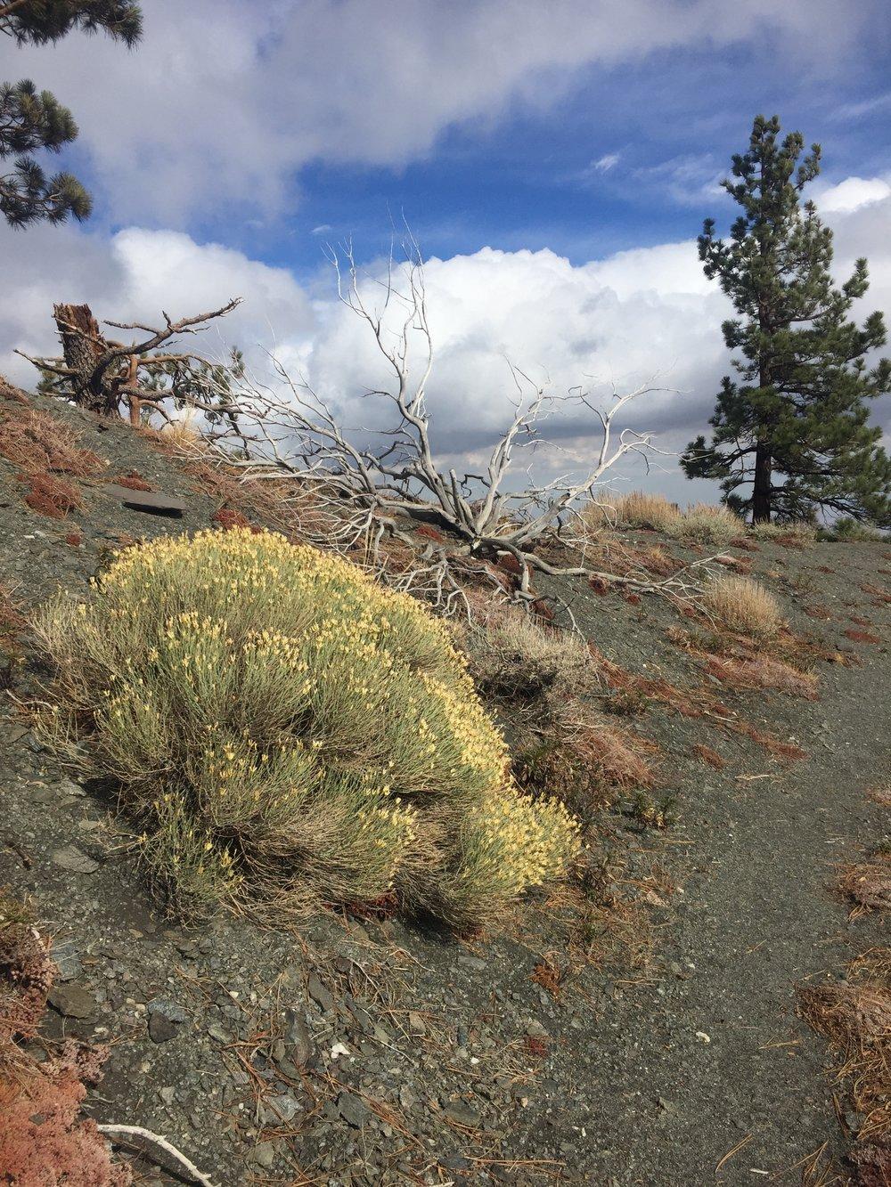 Dry landscape along the ridge line traverse towards Gobblers Knob