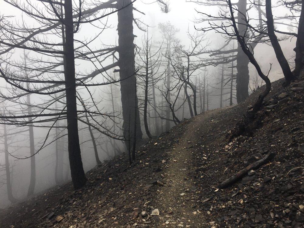 Foggy skeleton forest