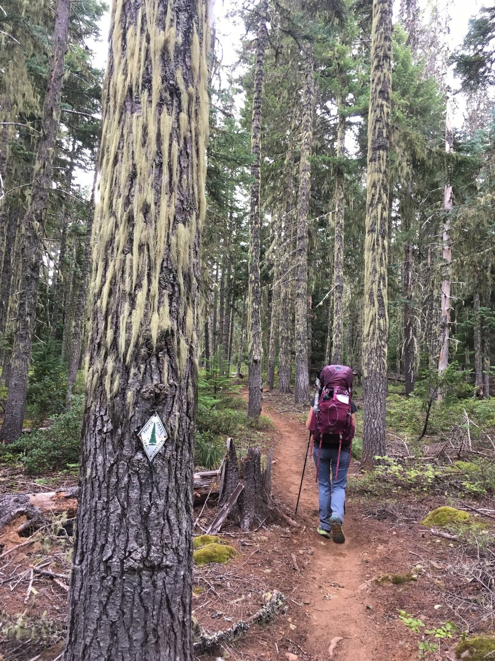 PCT Day 34- C Moss Trees and Old School Trail Signs.JPG