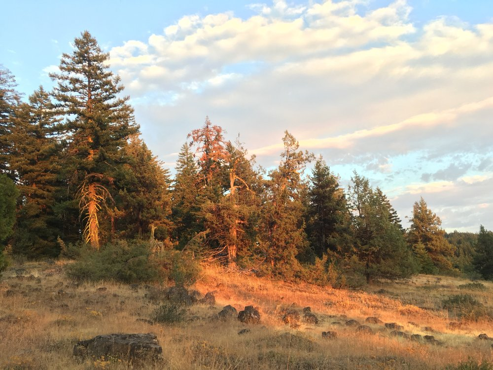 PCT Day 46- sunset golden hour trees and clouds.JPG