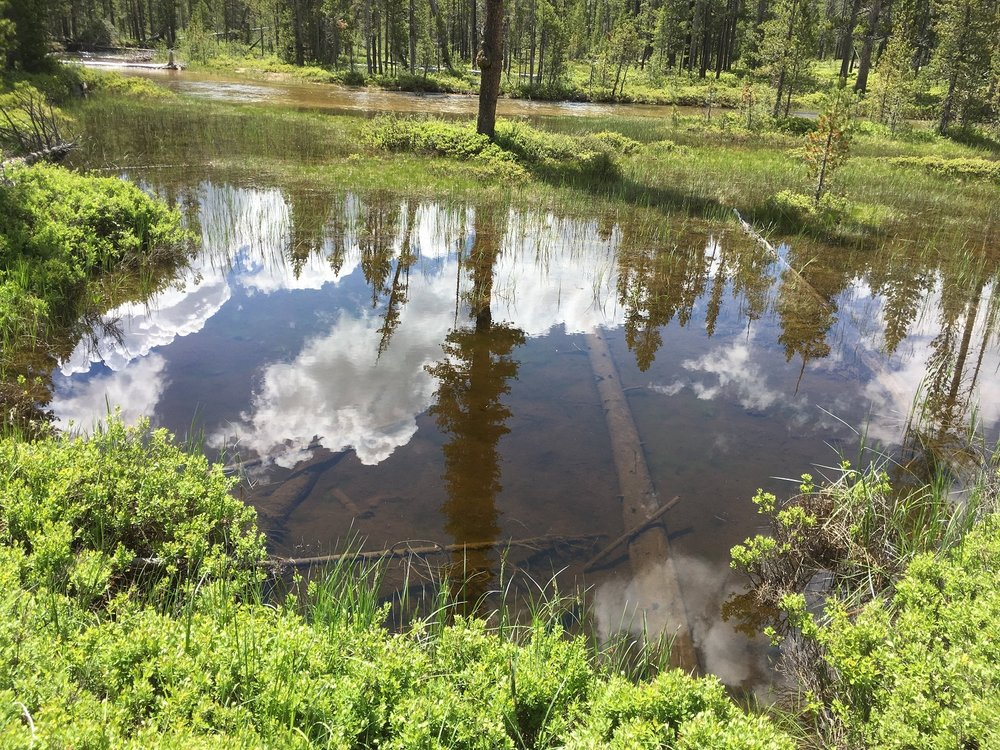 Sawtooth reflection