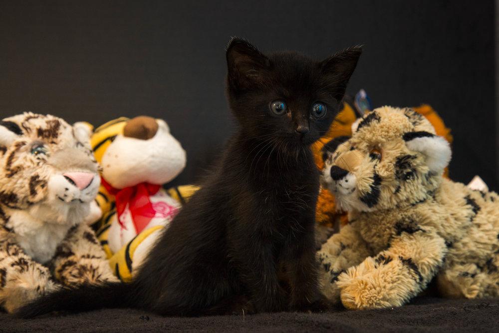 Kittens_facebook-4.jpg