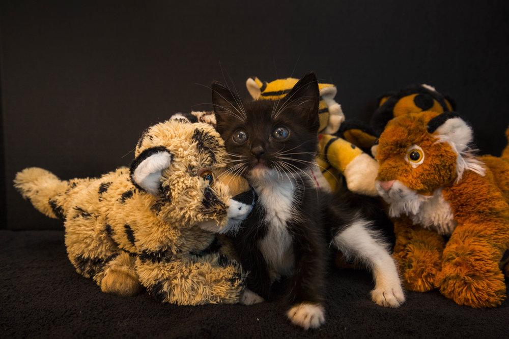 Kittens_facebook-3.jpg