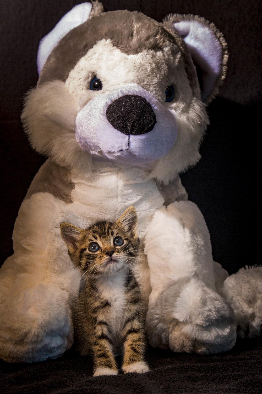 Kittens_facebook-9.jpg