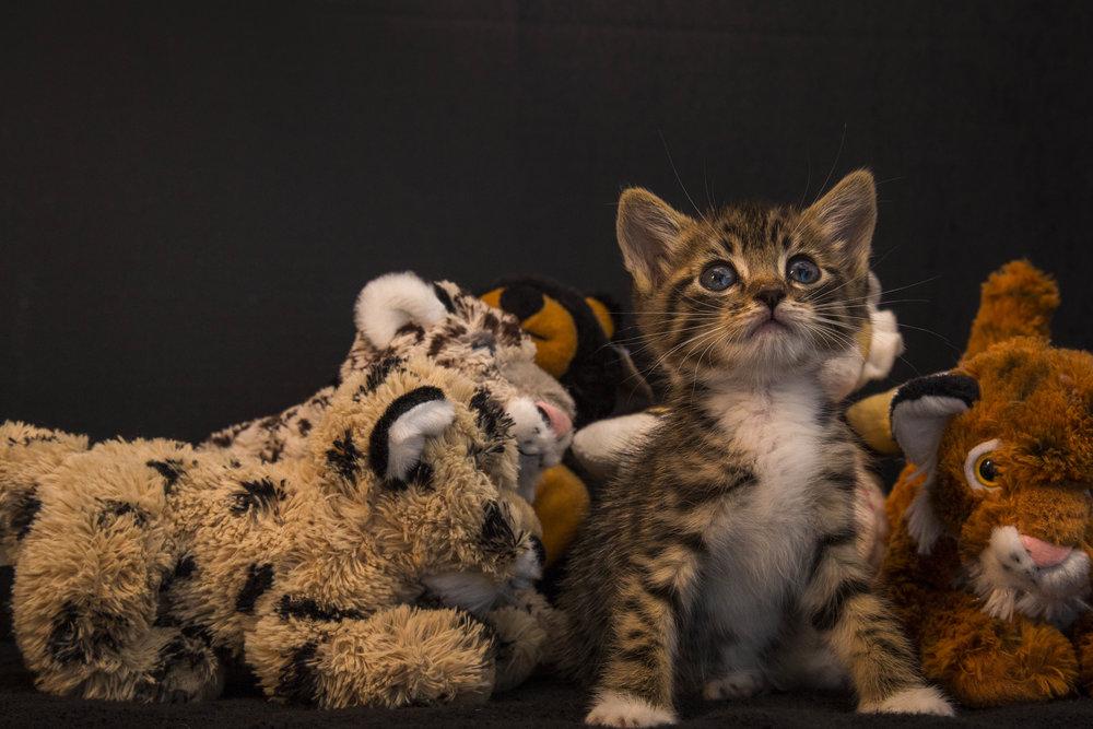 Kittens_facebook-6.jpg