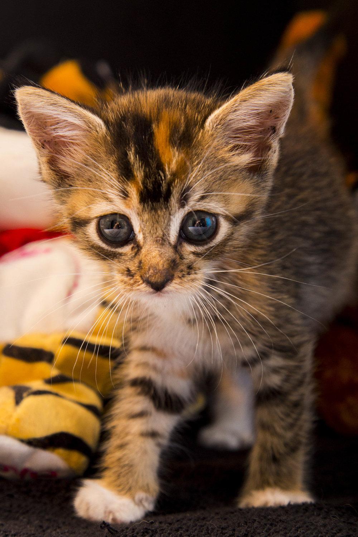 Kittens_facebook-12.jpg