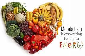 metabolis,.jpg