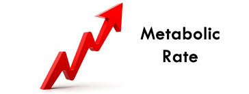 metabolic rate.jpg