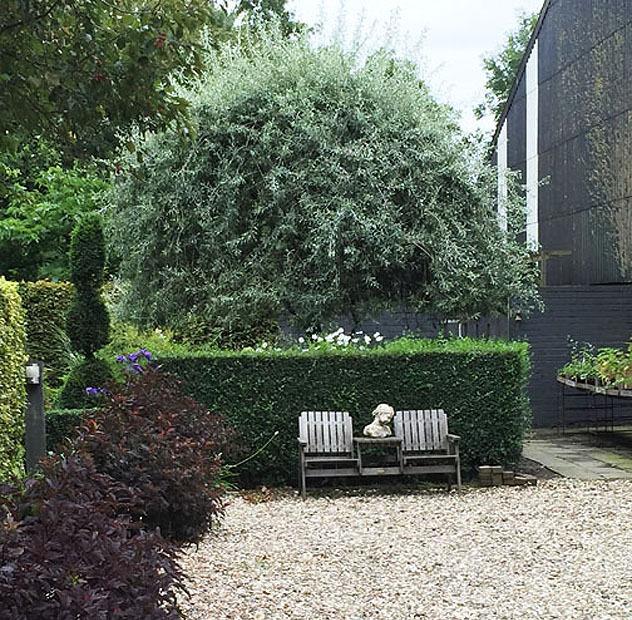 courtyard-pyrus1.jpg