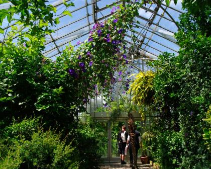 Display-Greenhouse-Mediterranean-Chatsworth3Main.jpg