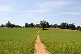 hambledon field.jpg