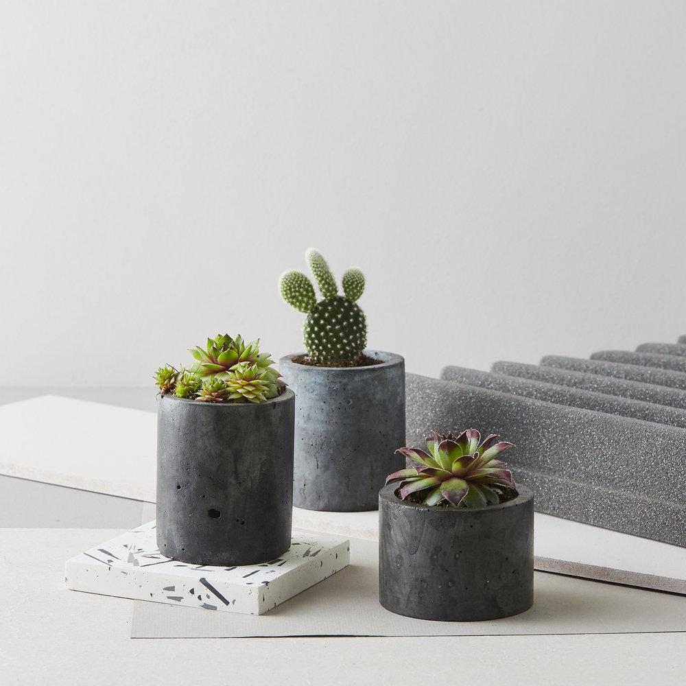 Concrete Planters by Geo-fleur