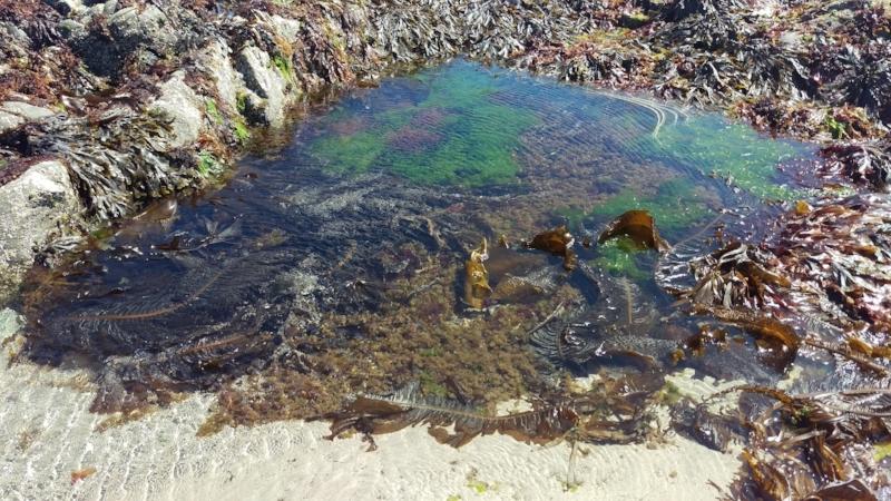 Rebecca Denley - Seaweed Beach Walks & Rock Pools