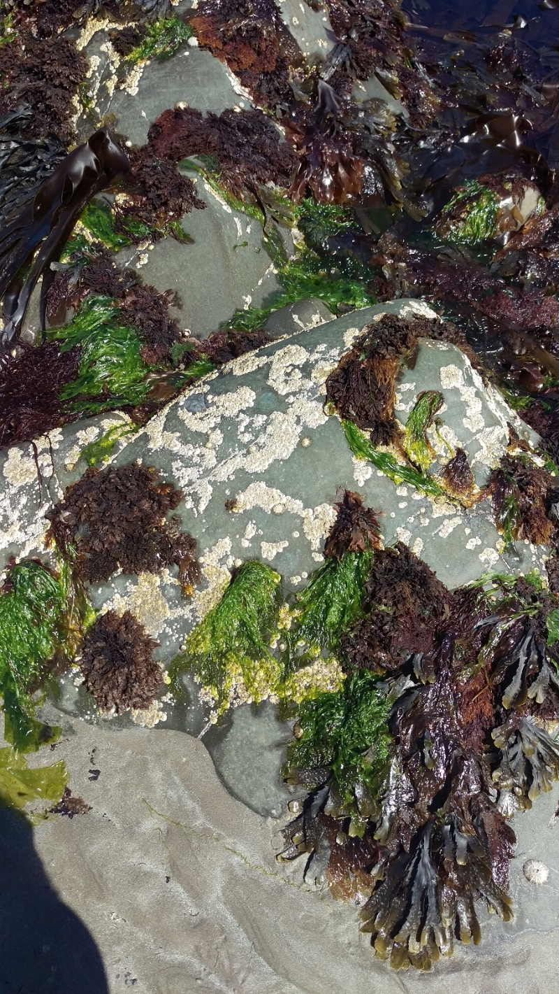 Rebecca Denley - Seaweed Beach Walks Rock Pools
