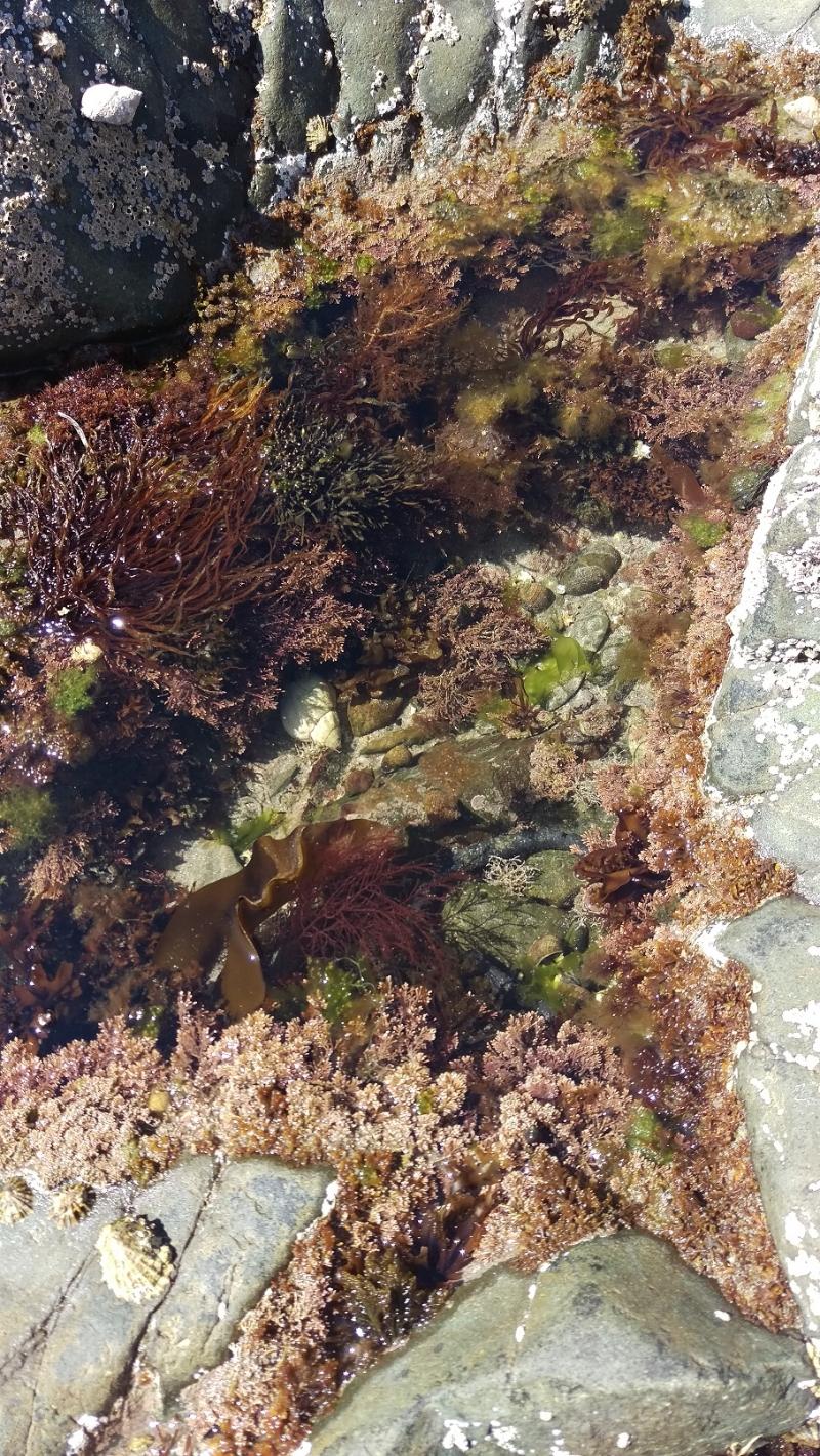 Rebecca Denley - Beach Walks Rock Pools Seaweed