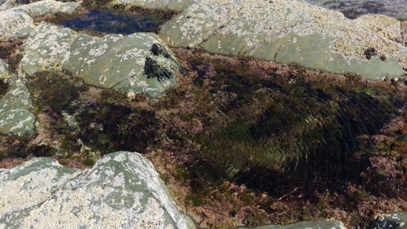 Rebecca Denley - Beach Walks Seaweed Rock Pools