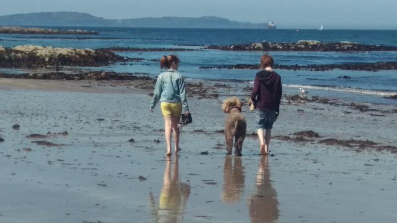 Rebecca Denley - Beach Walks & Seaweed