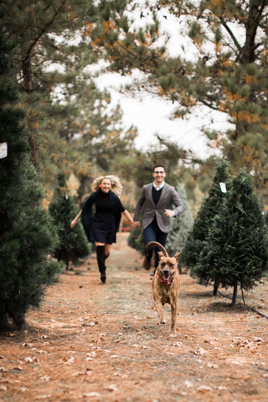 Sorghum-Mill-Christmas-Tree-Farm-Edmond-9.jpg