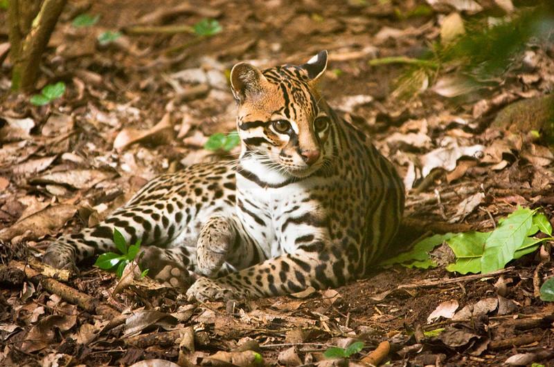 tigreZooAve.jpg