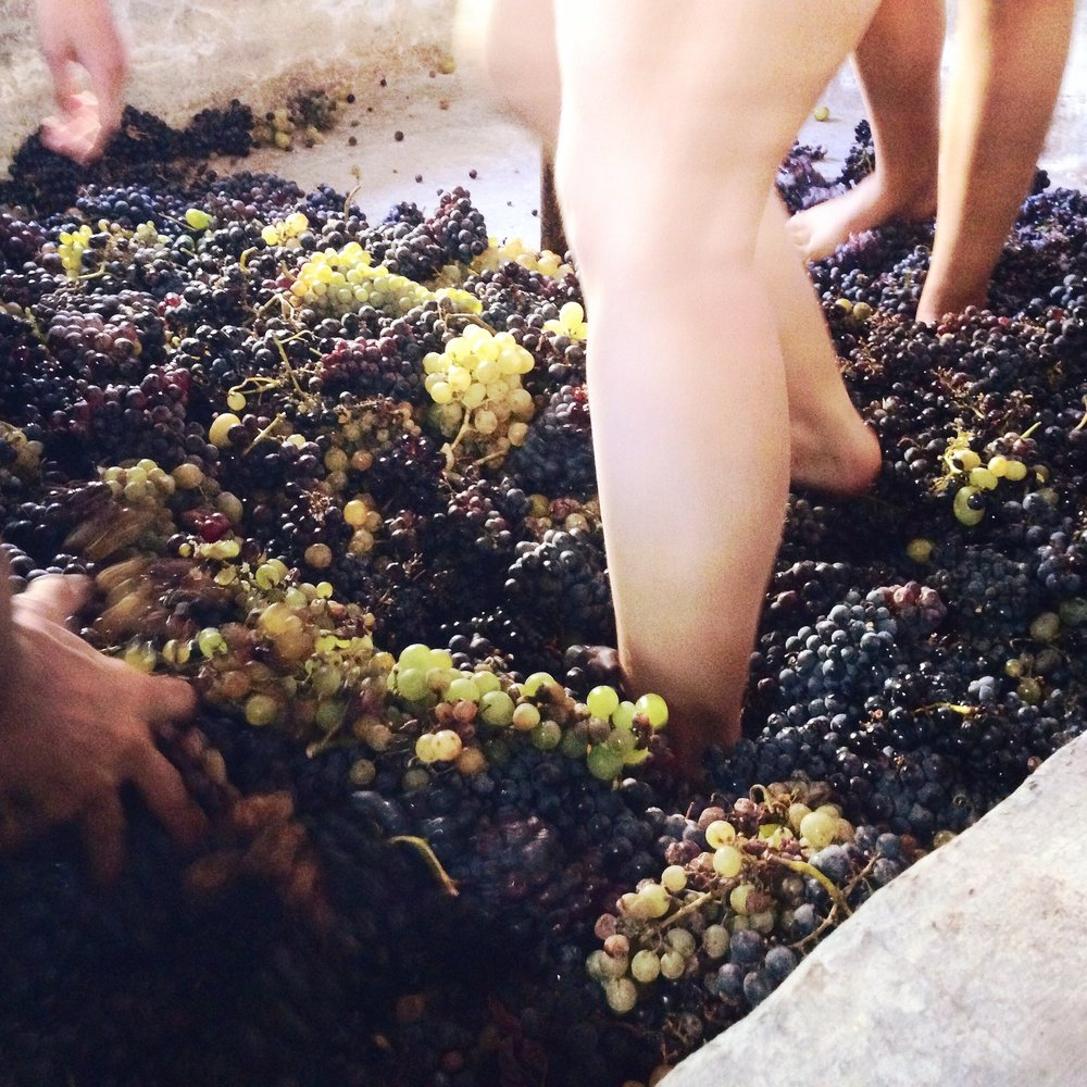 grapes-1799983_1920.jpg