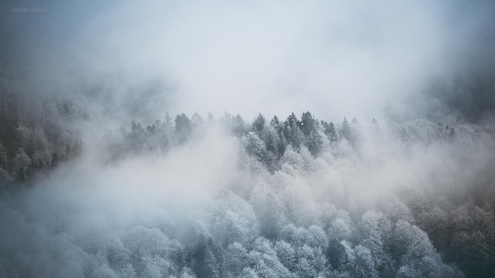 Ceață peste pădure - Daniel Mîrlea ©