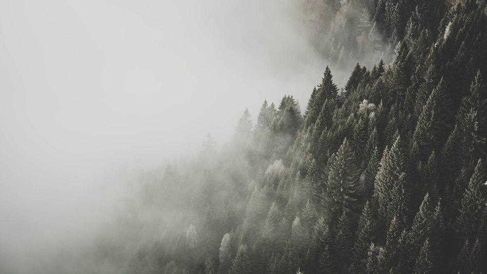 Pădure Somnoroasă- de Andreea Popescu ©