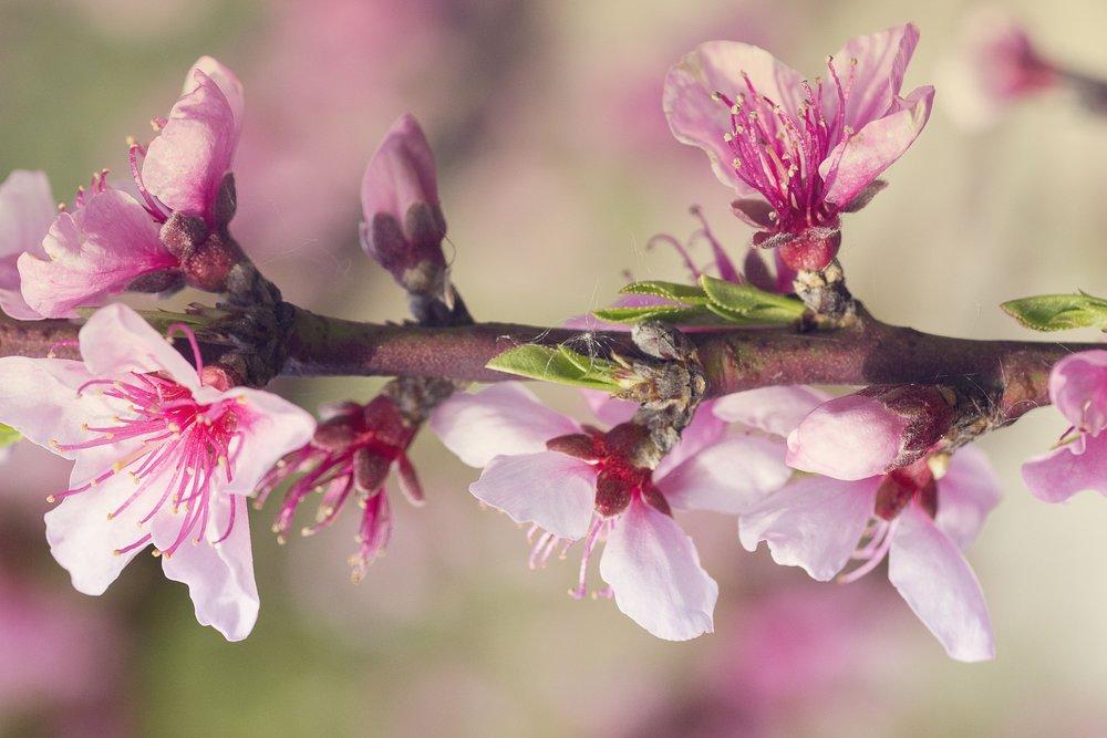 Tons de simplicidade - [Cor a cor, pintas alma minhaSorri e encanta com tons de simplicidadeLiberta-me com os teus instantes.]