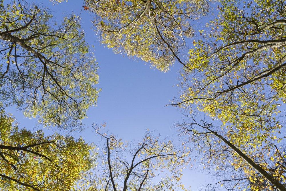Vista sem fim - [No infinito do céuVista sem fimIntenso, em crescendoAlmas entrelaçadasDe cor, coração, coloririas.]