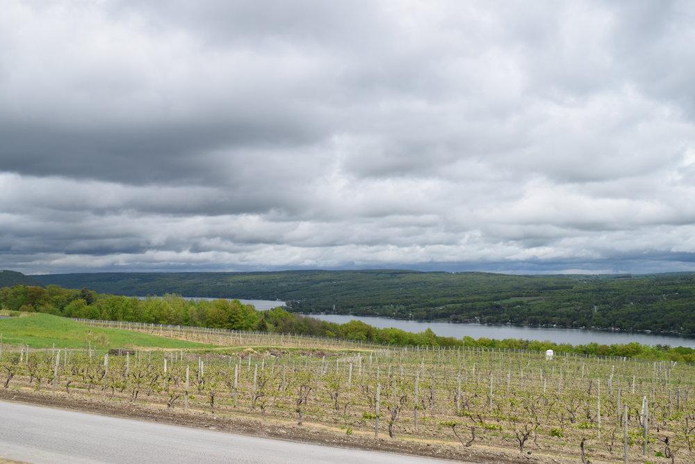 drfrankwines-vineyard-keuka.jpg