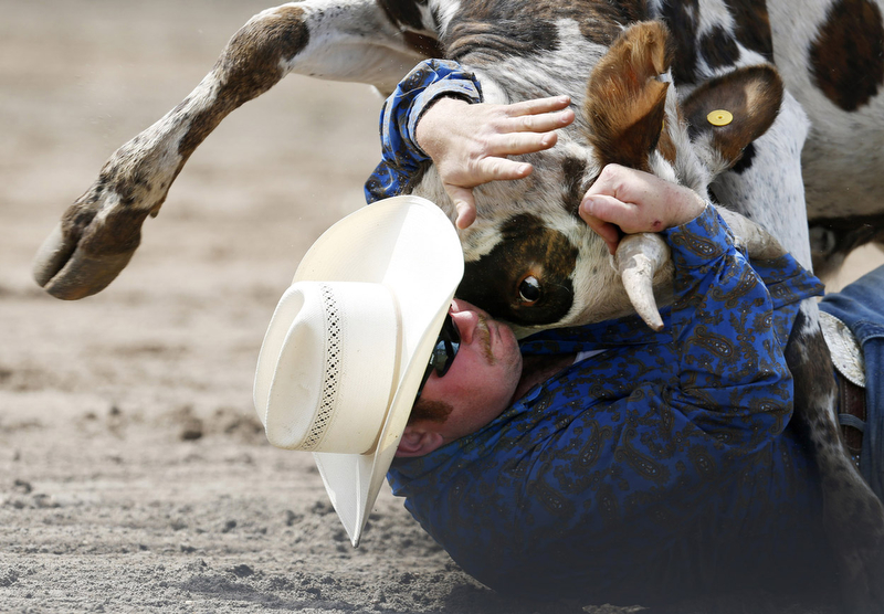 Nate Powell wrestles a steer during the 22nd annual Montgomery Professional Rodeo and Bullmania will be held this 7th at Daube Farms in Montgomery. 6/7/15