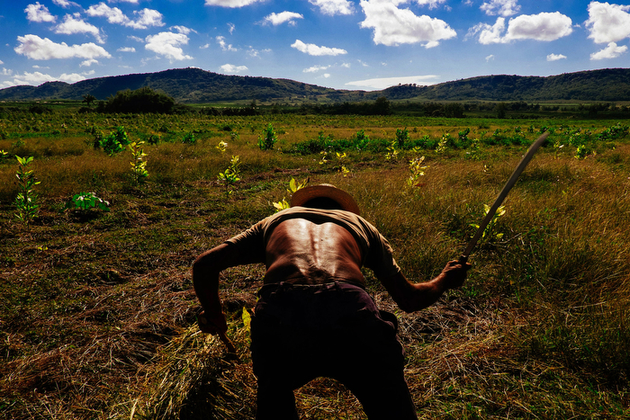 Clearing The Field 