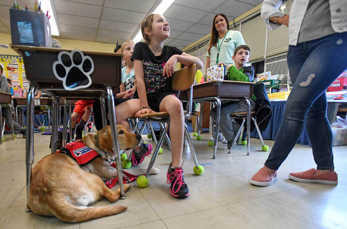 "After more than a year, 9-year-old Emma Brussell, who has Type 1 Diabetes, was finally united with her diabetic alert dog, Rufus: an 11-month-old, yellow English Labrador retriever. Brussell began her journey to raise money for the dog by selling her paintings on Facebook. Thanks to some media coverage and a pair of generous supporters she quickly raised more than $15,000. Brussell and her mother then used the extra funds to start ""Emma's Journey"", a nonprofit that helps other children who have Type 1 Diabetes make their dreams of owning a diabetic alert dog come true.