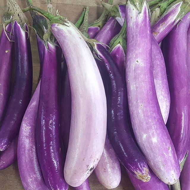 Eggplant, beautiful beautiful eggplant. Grown by @quileteorganics