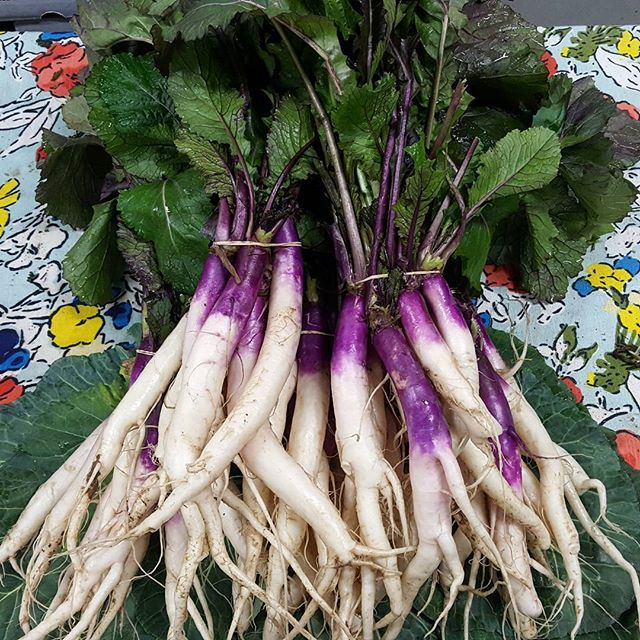 Hinona Kabu. These tender and spicy salad turnips are one of our fall favorites.