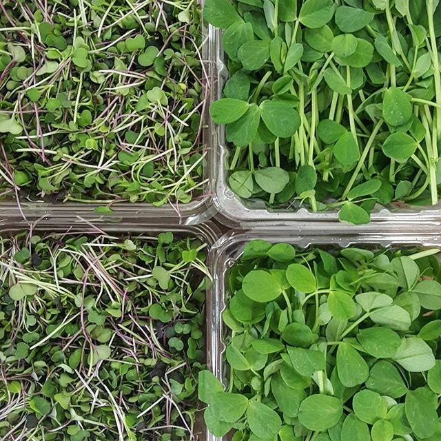Micro green and pea shoots from @ashbournefarms mmmmm