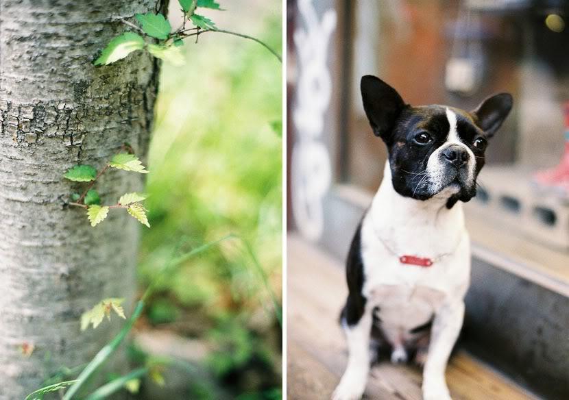 dogtree.jpg