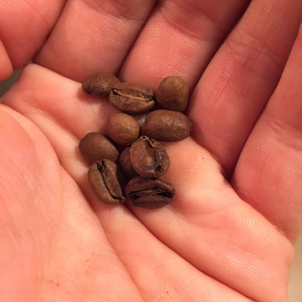 Sweet Bloom Coffee Roasters Ethiopia Gedeo.JPG
