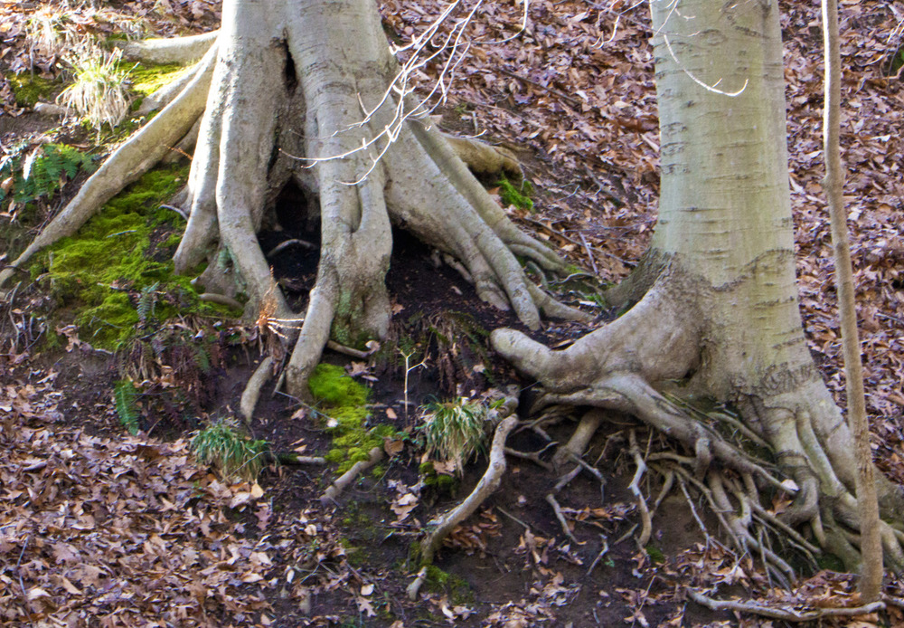 Two root systems.  Hands in the earth.  Photo by Rita Arnold