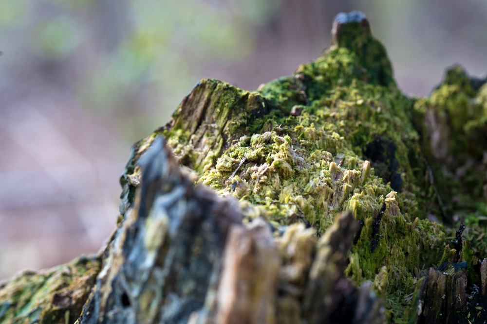 New growth on top of the old.  Moss Mountain.  Photo by Joseph Maas