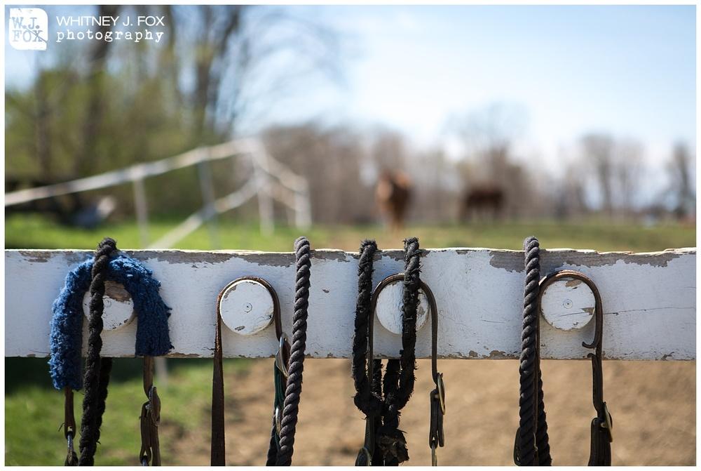 homestead_rest_and_be_thankful_farm_lyman_maine_rustic_wedding_venue_whitney_j_fox_weddings_1345.jpg