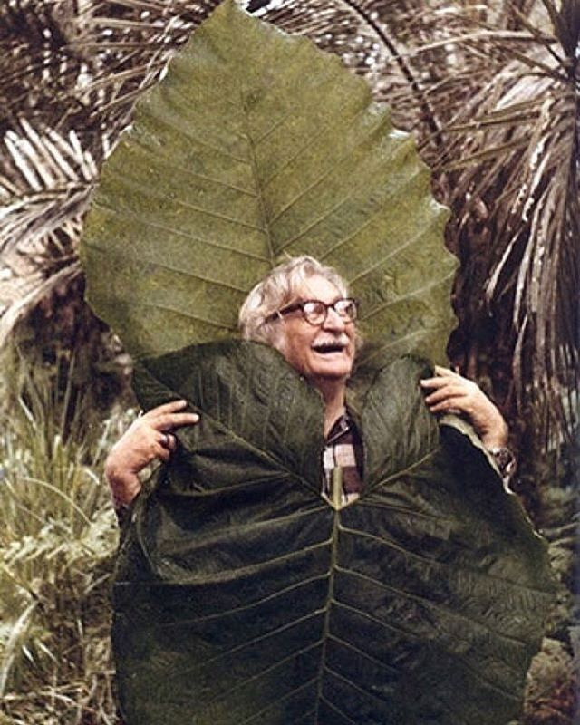 Roberto Burle Marx, Brazilian landscape architect, painter, print maker, ecologist, naturalist, artist and musician. 🌿✌️ 📷 @nativecolor ⠀ ⠀ Tag @WearNatural and #WearNatural to be featured⠀ .⠀⠀⠀ .⠀⠀⠀ .⠀⠀⠀ .⠀⠀⠀ .⠀⠀⠀ #AllNatural #NaturalClothing #Biodegradable #Sustainable #SustainableStyle #EcoFashion #GreenFashion #SustainableFashion #SustainableLiving #SustainablyChic #ZeroWaste #ZeroWasteLifestyle #ZeroWasteLiving #ZeroWasteFashion #ZeroWasteStyle #RobertoBurleMarx